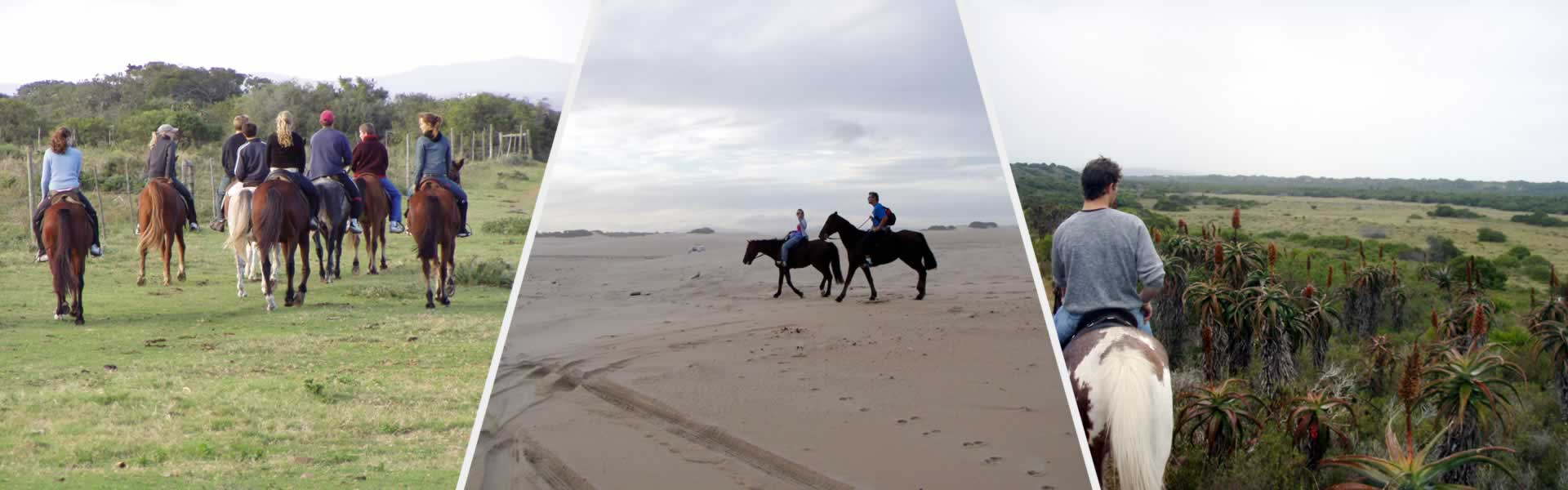 Horse Riding on Jeffreys Bay Beaches